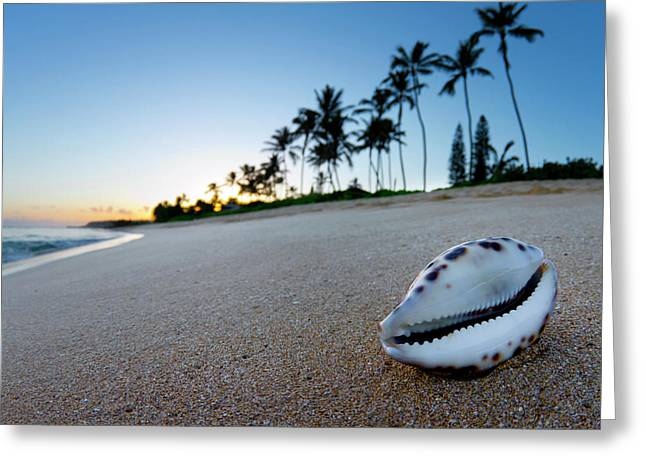 Cowrie Palms Greeting Card by Sean Davey