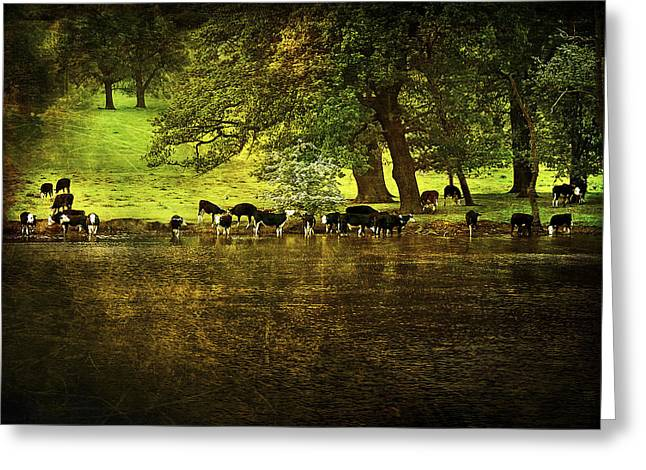 Birch Tree Digital Greeting Cards - Cows Greeting Card by Svetlana Sewell