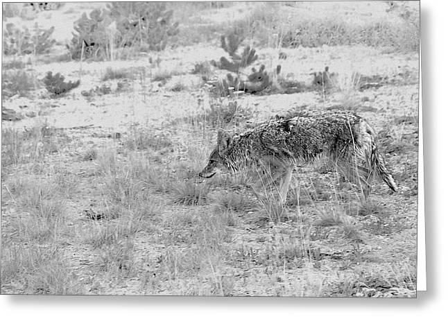 Brush Wolf Greeting Cards - Coyote blending in Greeting Card by Christine Till
