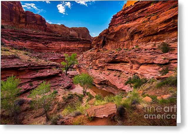 Coyote Gulch At Sunset Greeting Card by Gary Whitton