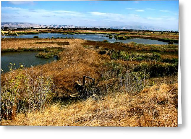 October Pyrography Greeting Cards - Coyote Hills Greeting Card by Karen  W Meyer