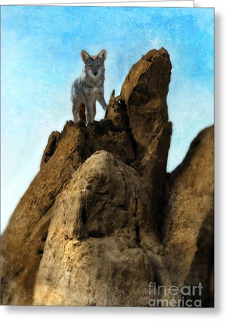 Still Standing Greeting Cards - Coyote on Rocks Greeting Card by Jill Battaglia
