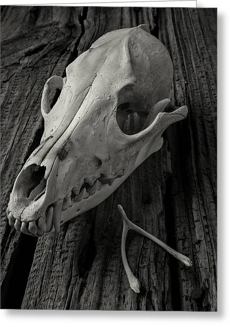 Fangs Greeting Cards - Coyote Skull And Wishbone Greeting Card by Garry Gay