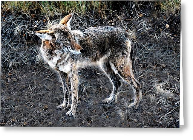 Coyote Art Greeting Cards - Coyote waits Greeting Card by David Lee Thompson