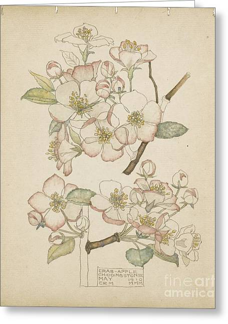 Rennie Greeting Cards - Crab Apple Greeting Card by Celestial Images