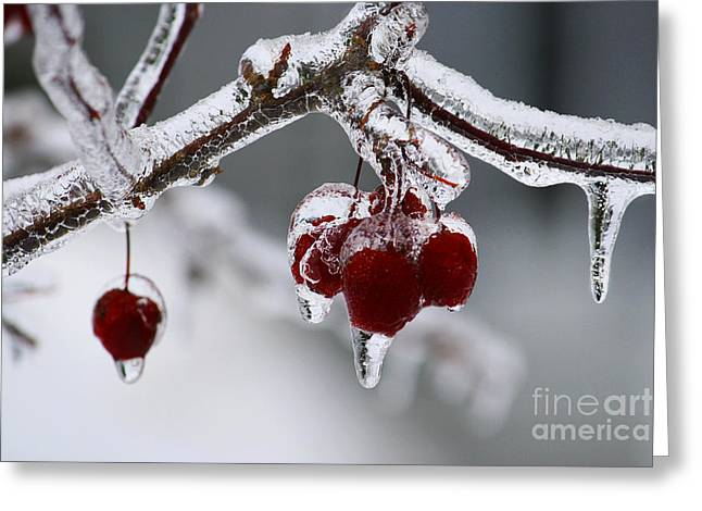 Winter In Maine Greeting Cards - Crab Apples in December  Greeting Card by Katie W