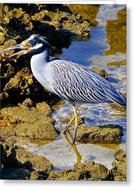 Florida Wildlife Photography Greeting Cards - Crab dinner Greeting Card by David Lee Thompson