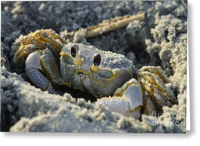 Beach Photos Greeting Cards - Crab In A Hole Greeting Card by Jennifer White