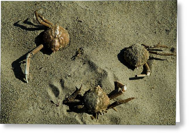 Shell Fish Greeting Cards - Crab Shells In The Sand On A Beach Greeting Card by Todd Gipstein