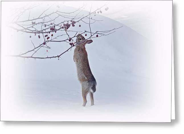 Crabapple Bunny Greeting Card by MTBobbins Photography