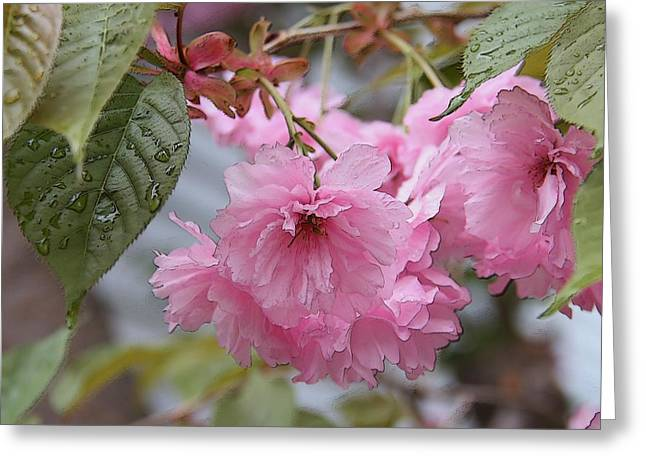 Crabapple Cards Greeting Cards - Crabapple Tree in Bloom Greeting Card by Yvonne Nowicka-Wright