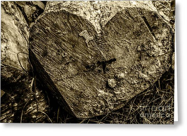 Saw Greeting Cards - Cracked heart of a Tree Greeting Card by Griff Griffiths