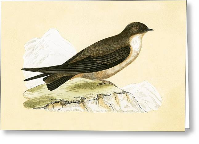 Crag Swallow Greeting Card by English School