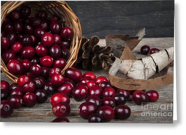 Red Berries Greeting Cards - Cranberries still life Greeting Card by Elena Elisseeva