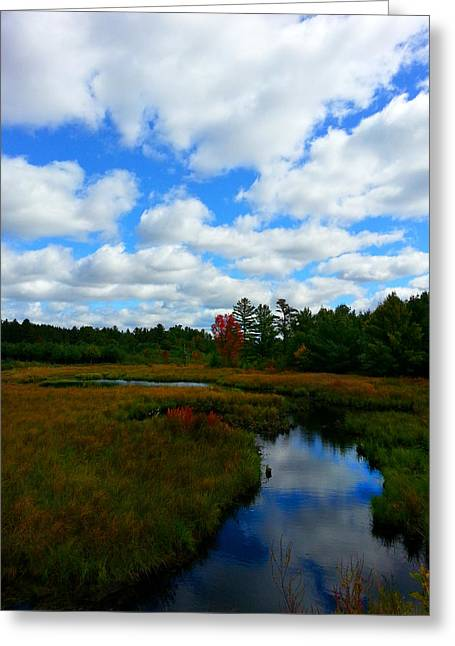 Fall Trees Greeting Cards - Cranberry Country 2 Greeting Card by Brook Burling