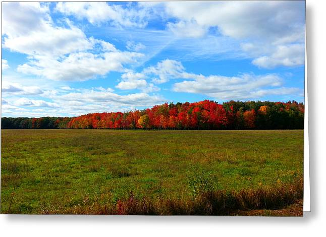 Fall Trees Greeting Cards - Cranberry Country 7 Greeting Card by Brook Burling