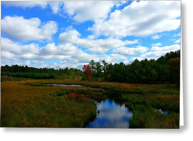 Fall Trees Greeting Cards - Cranberry Country Greeting Card by Brook Burling