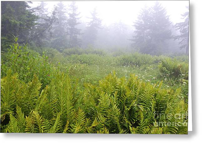 Allegheny Greeting Cards - Cranberry Glades Early Morning Greeting Card by Thomas R Fletcher