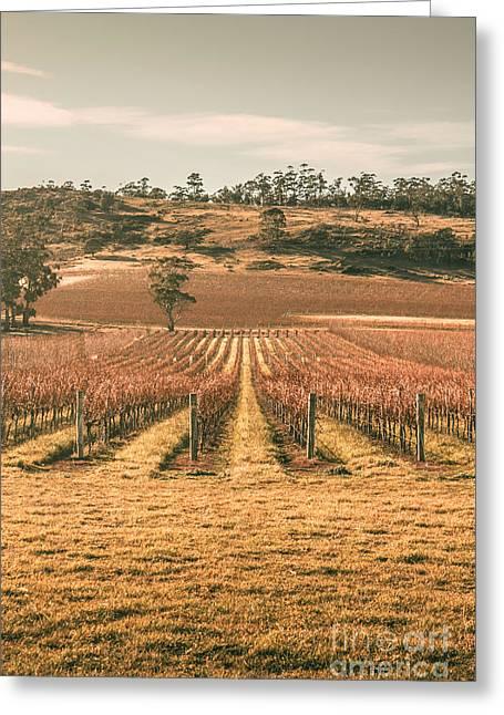 Cranbrook Vineyard Greeting Card by Jorgo Photography - Wall Art Gallery