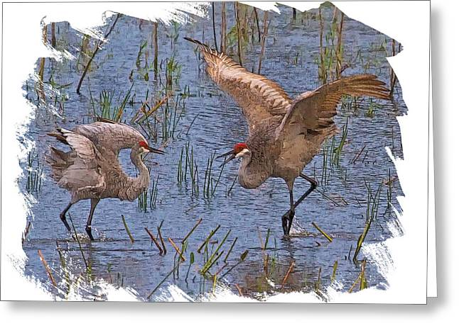 Sandhill Cranes Greeting Cards - Crane Courtship Greeting Card by Larry Linton