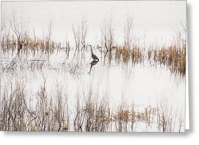 Watson Lake Greeting Cards - Crane in Reeds Greeting Card by Laura Pratt