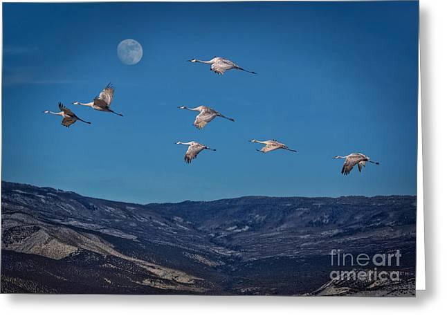 Cranes Across Colorado Blue Greeting Card by Janice Rae Pariza