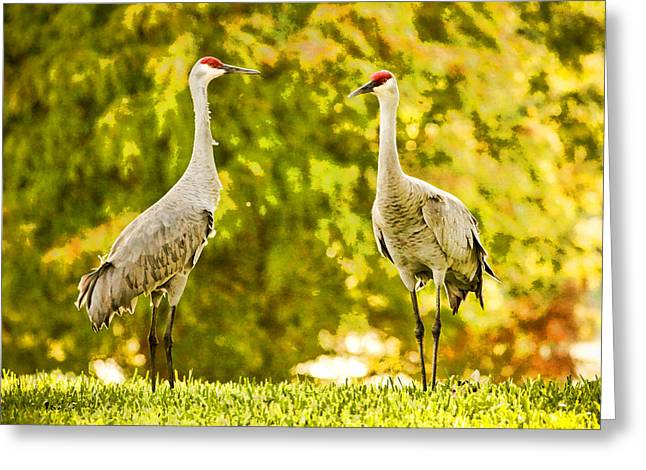 Sandhill Cranes Greeting Cards - Cranes Greeting Card by Paul Bartoszek