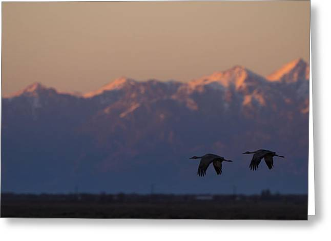 Cranes Greeting Cards - Cranes Silhouette  Greeting Card by Noah Bryant