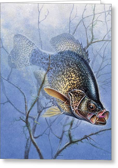Crappies Greeting Cards - Crappie Cover Tangle Greeting Card by JQ Licensing