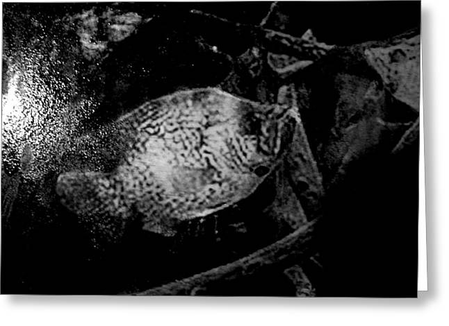 Crappie In Cover Greeting Card by Robert Cunningham