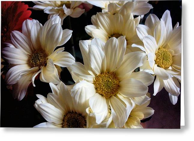 Floral Photographs Greeting Cards - Cream Daisies Greeting Card by Susan  Epps Oliver