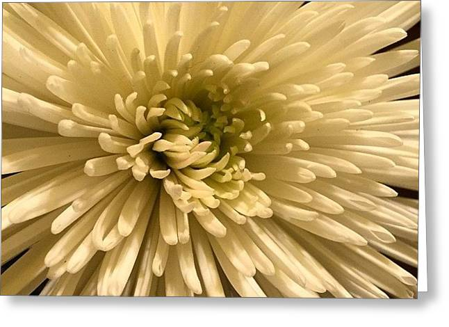 Cream White 2015 Greeting Card by Althea Morgan-Campbell