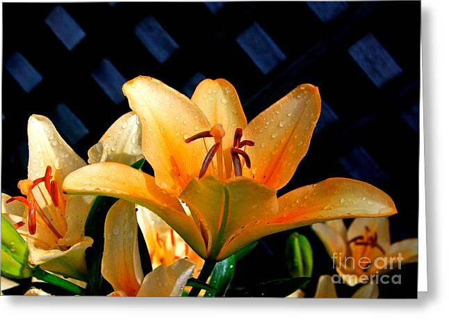 Floral Photographs Digital Greeting Cards - Creation-2 Greeting Card by Robert Pearson