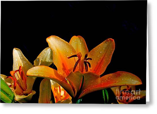 Floral Photographs Digital Greeting Cards - Creation Greeting Card by Robert Pearson