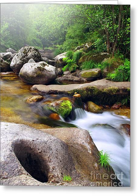 Beautiful Creek Greeting Cards - Creek Greeting Card by Carlos Caetano