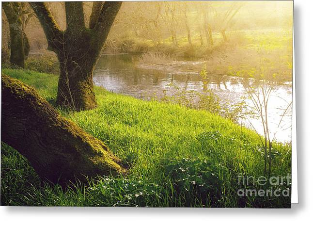River View Greeting Cards - Creek Shore  Greeting Card by Carlos Caetano