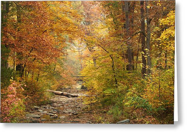 Creekbed Greeting Cards - Creekbed At Beavers Bend Greeting Card by Carolyn Fletcher