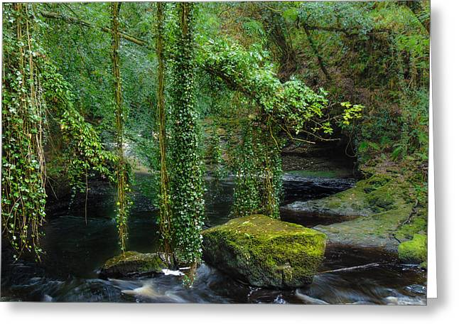 Woodland Scenes Greeting Cards - Creepers Greeting Card by Felikss Veilands