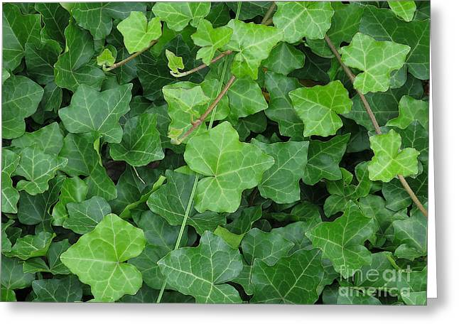 Greeting Cards - Creeping Ground Cover Greeting Card by Ann Horn