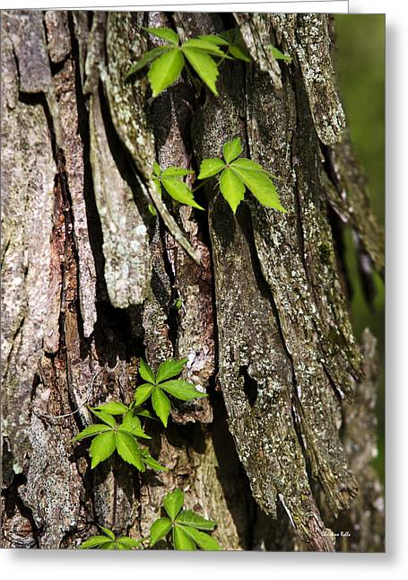 Outdoor Life Art Greeting Cards - Creeping Vine on Bark Greeting Card by Christina Rollo