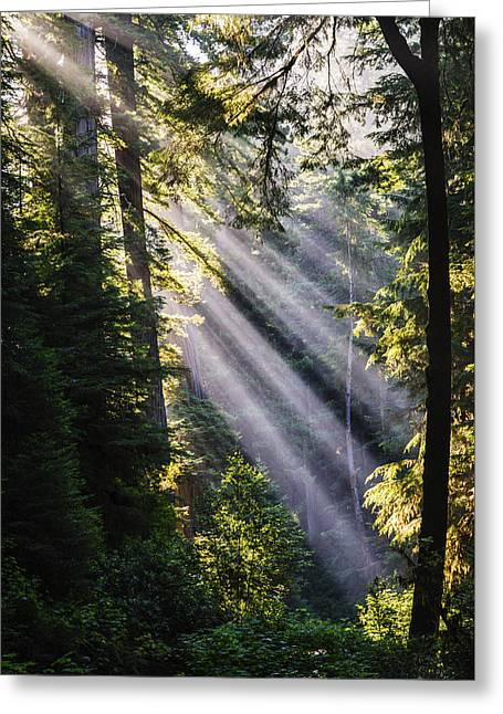 Crepuscular Rays Greeting Cards - Crepuscular Rays through the trees at Redwood National Park Greeting Card by Vishwanath Bhat
