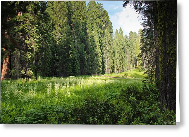Sequoia Greeting Cards - Crescent Meadow In Sequoia Greeting Card by Heidi Smith