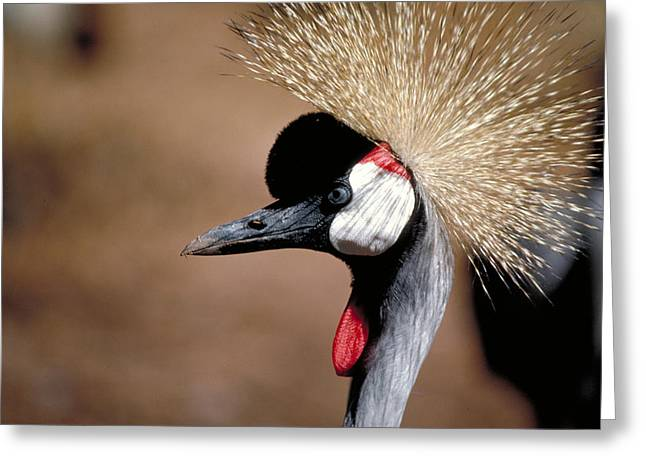 All Birds Greeting Cards - Crested Crane Greeting Card by Carl Purcell