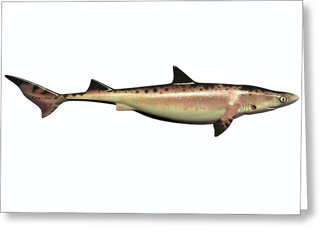 Sea Life Digital Art Greeting Cards - Cretaceous Hybodont Shark Greeting Card by Corey Ford
