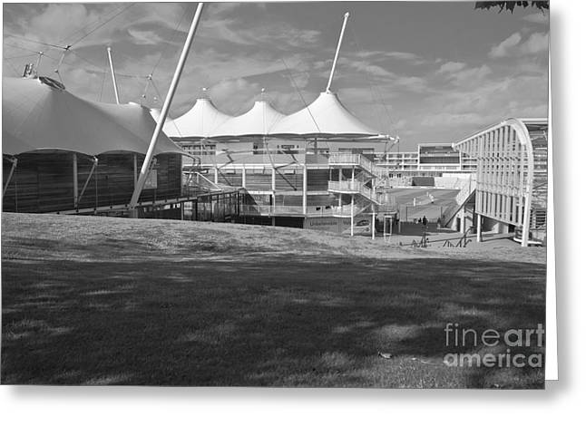 Empty Chairs Greeting Cards - Cricket Ground Southampton Black and white Greeting Card by Terri  Waters