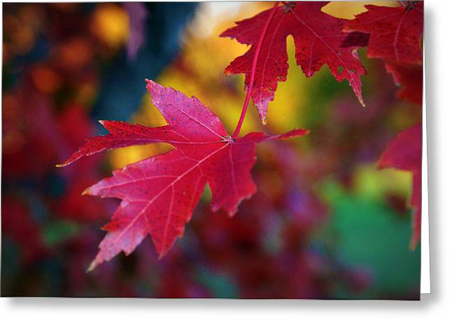 Red Leaves Greeting Cards - Crimson Close Up Greeting Card by Cricket Hackmann