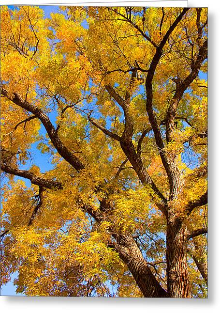 Striking Photography Greeting Cards - Crisp Autumn Day Greeting Card by James BO  Insogna