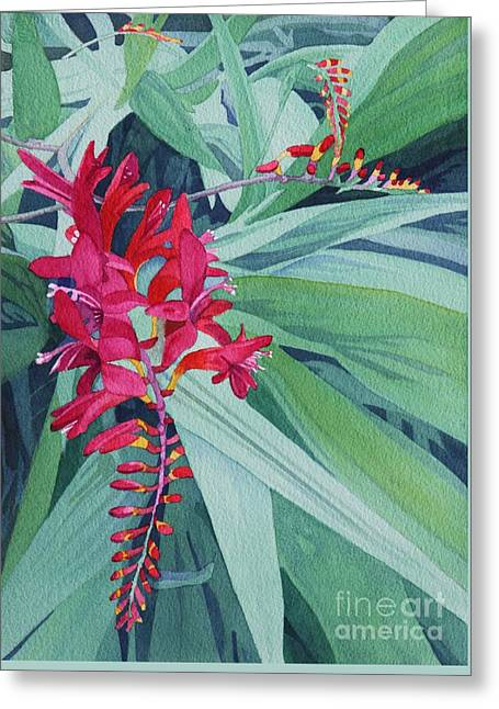 Crocosmia Greeting Cards - Crocosmia Cluster Greeting Card by Amanda Schuster