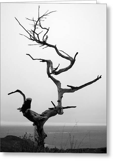Matt Hanson Greeting Cards - Crooked Tree Greeting Card by Matt Hanson