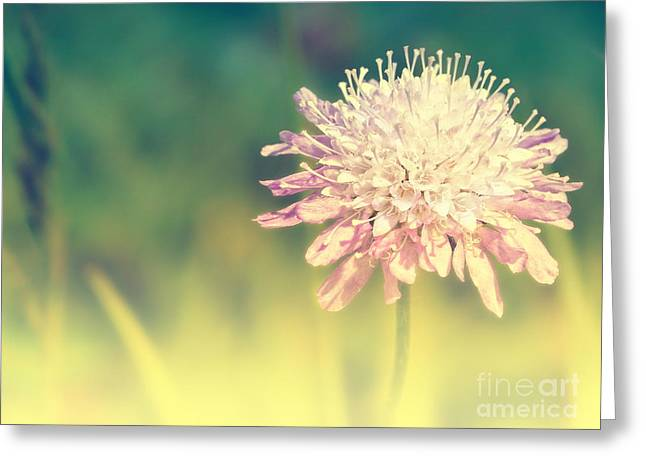 Macro Mixed Media Greeting Cards - Pincushion Flower Greeting Card by Angela Doelling AD DESIGN Photo and PhotoArt